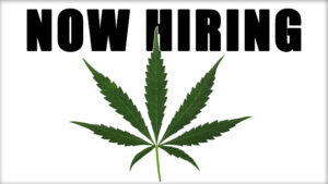 now hiring 300x169 - Writing a Resume for the Cannabis Industry