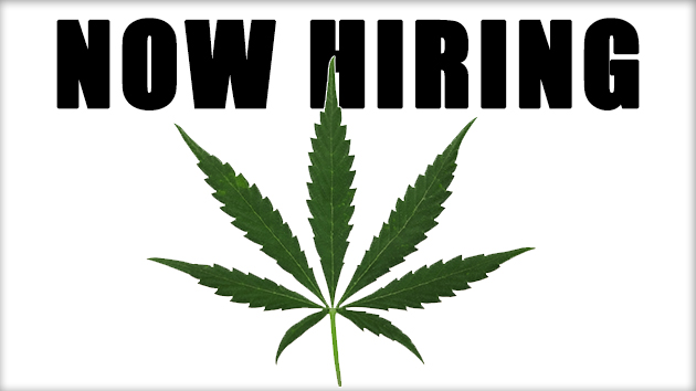 writing a resume for the cannabis industry